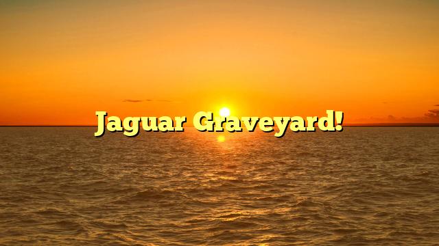 Jaguar Graveyard!
